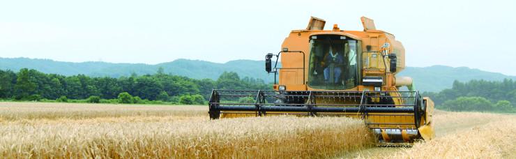 収穫風景の写真